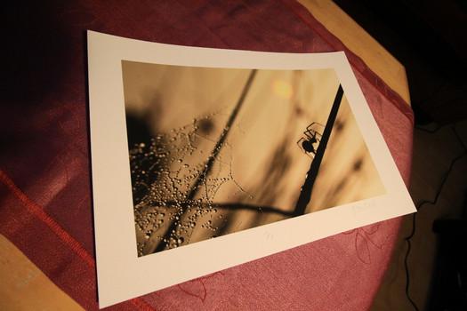Auf Hahnenmühle William Turner Fine Art Papier 20x30