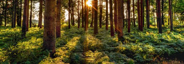 Sunset in the woods of Pinneberg
