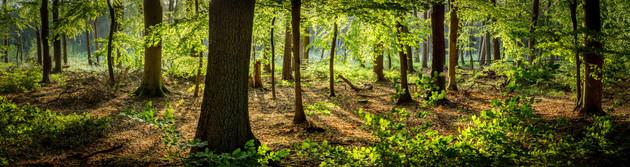 Summer in the Woods of Pinneberg - Schleswig Holstein