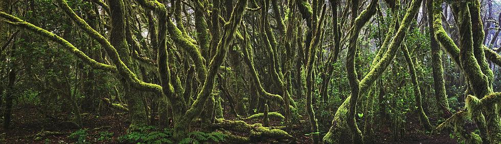 La Gomera Urwald Woodland Forest Canarias Yannick Jorzik-Brzelinski Ypsilon-Photography