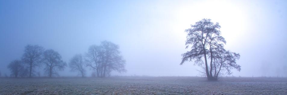 2021-03-02 Boho Nebel Esche (1 von 1)-4.