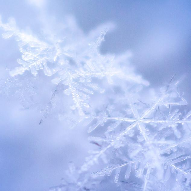 21-09-02_Schneeflocke (1 von 7).jpg