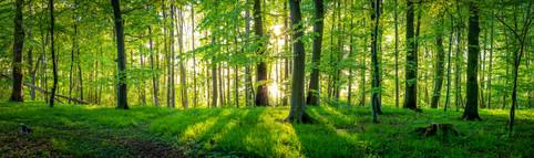 A little forest in Plön - Schleswig Holstein