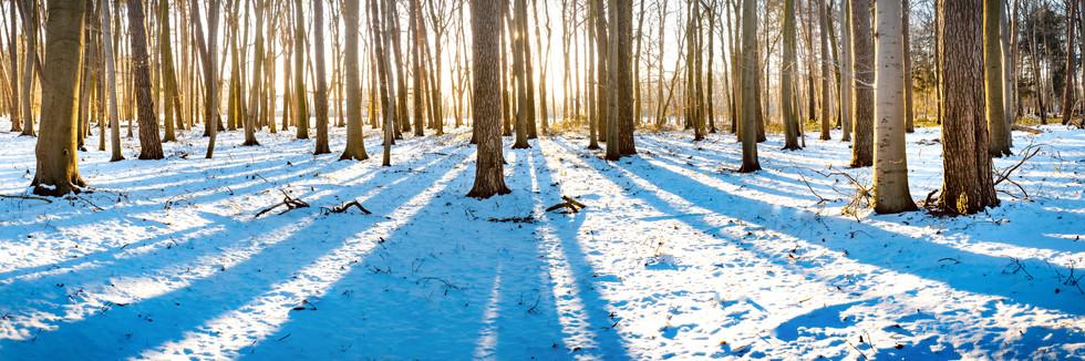 2021-02-13-Himmelmoor-Wald-lightbleed.jp