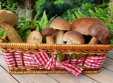 Cogumelos: Importantes Aliados de Uma Dieta Saudável