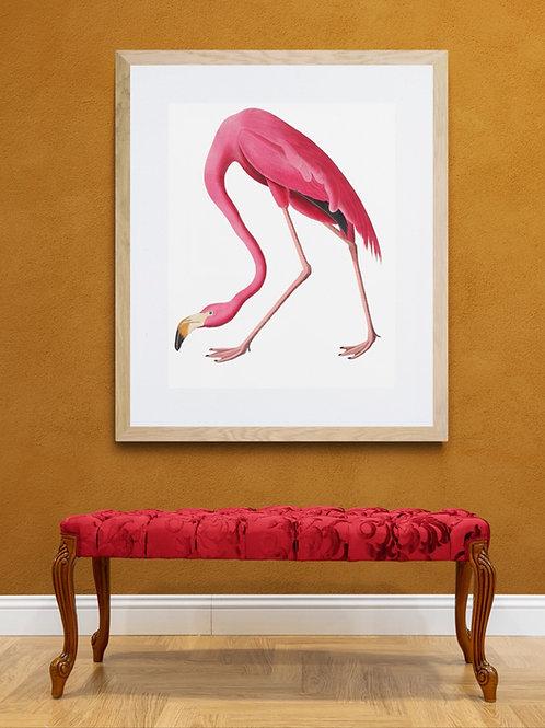 Framed Giclee print - Vintage Flamingo study