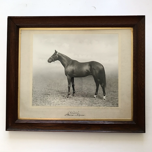 1940s framed photograph of thoroughbred 'Nearco' - Godfather of Thoroughbreds