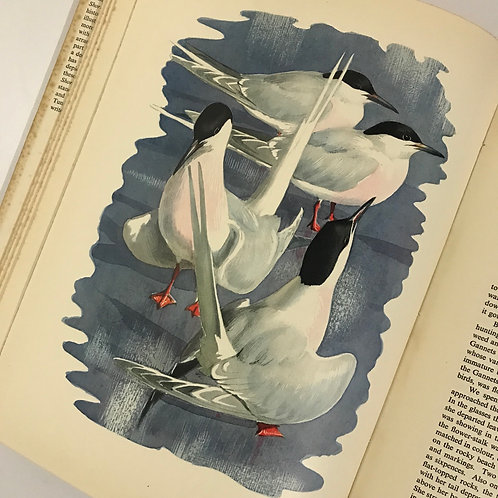 Shorelands Summer Diary by C.F. Tunnicliffe - 1952