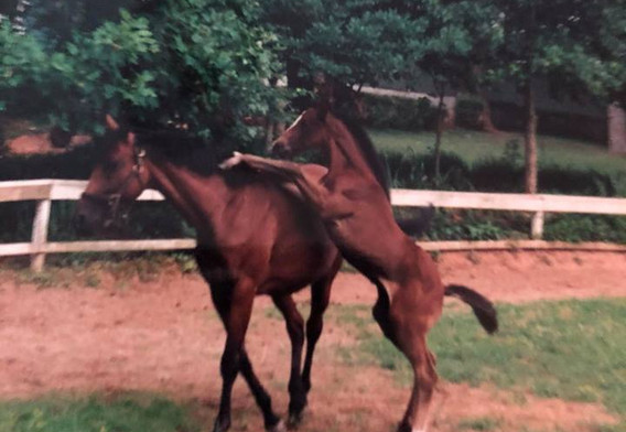 Baby Schale and Star