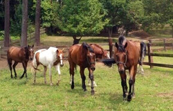 The school horse boys