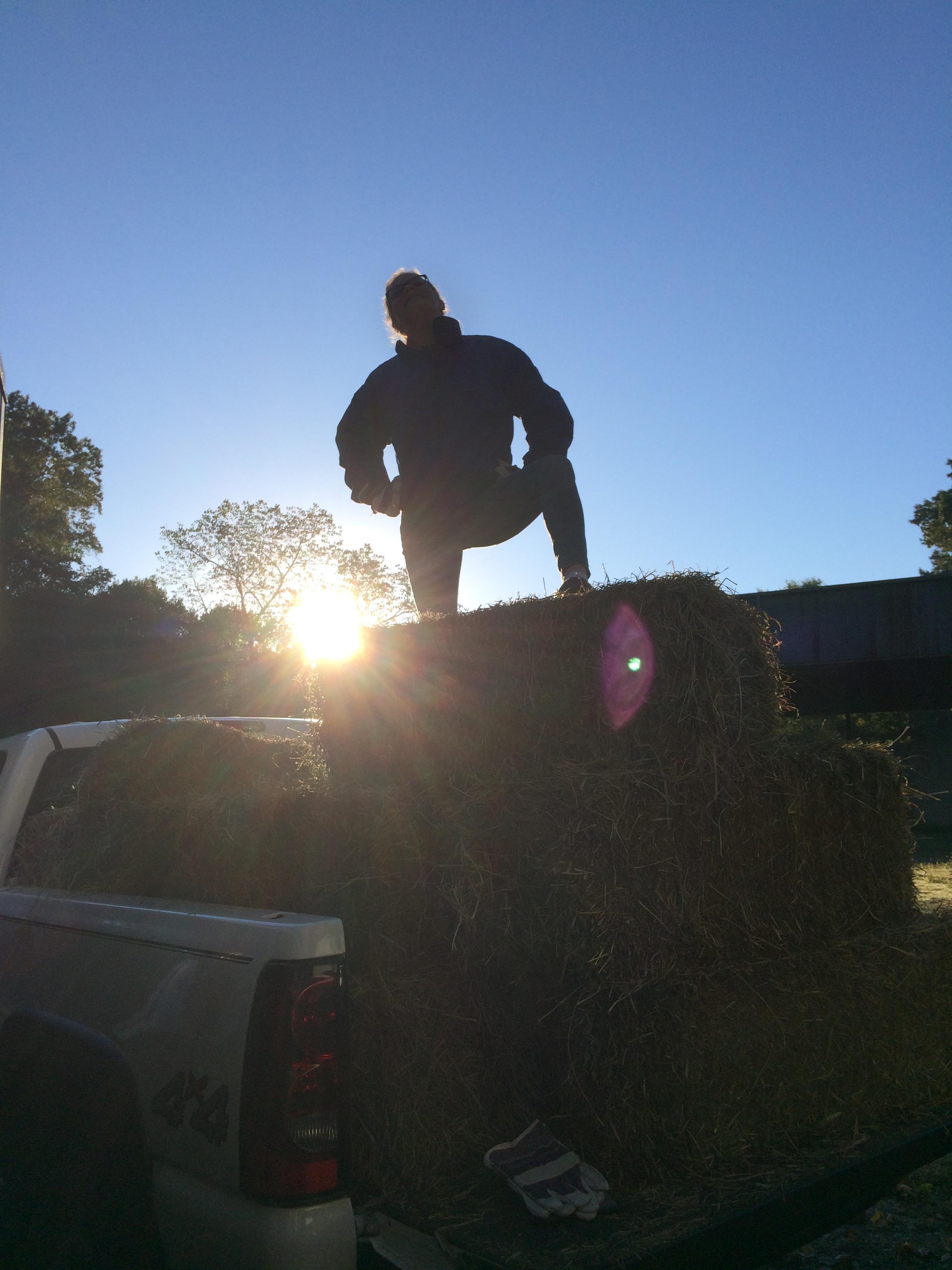 Juliet loads hay