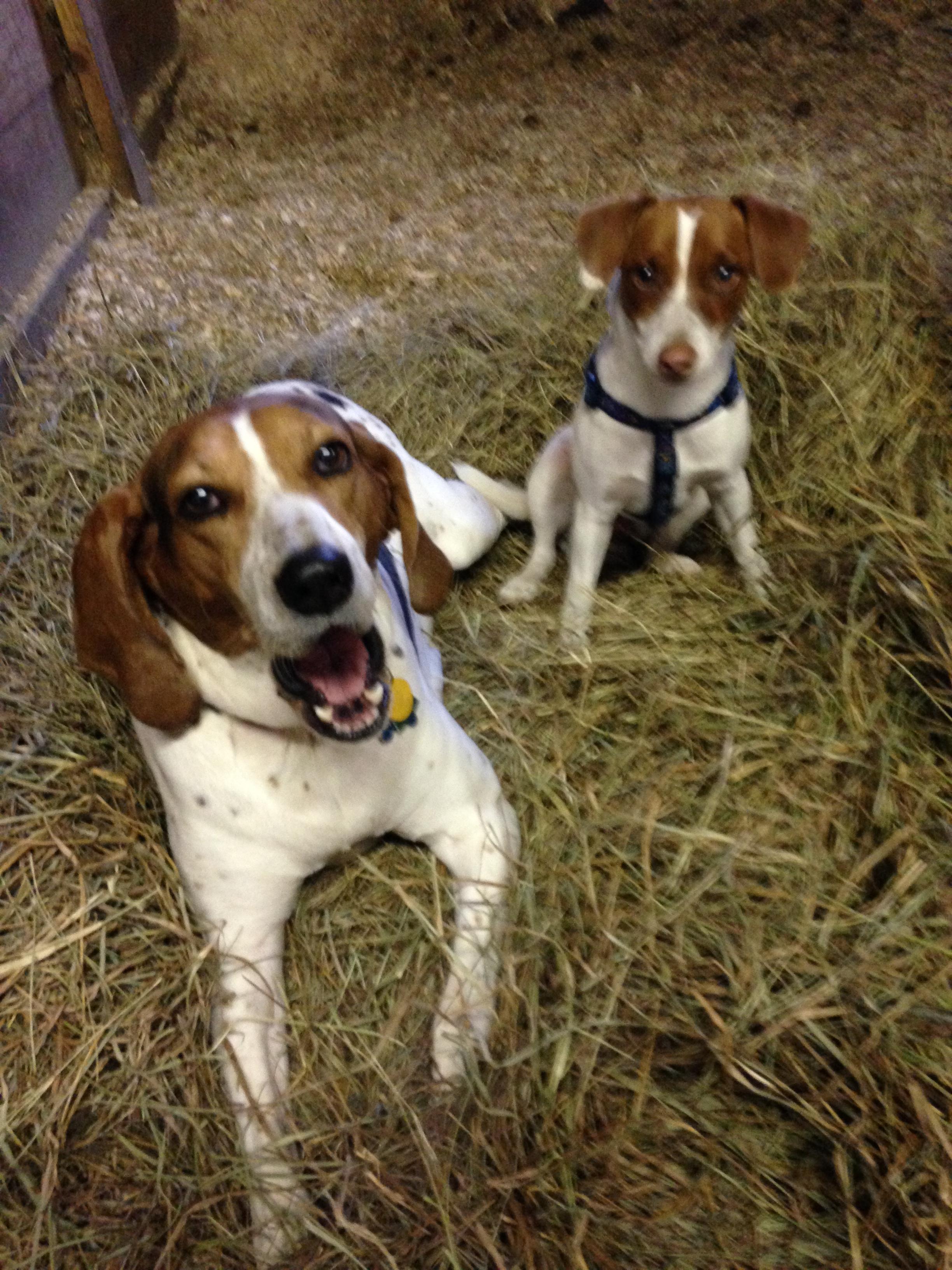 Sadie and Tipper