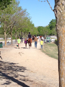 Horse shows....