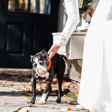 Pour cette photo de mariage du first look, le chien s'est joint aux mariés.