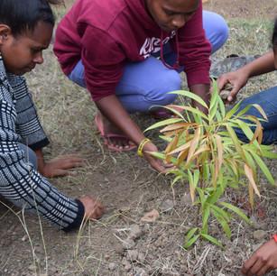 Plantation KAORI