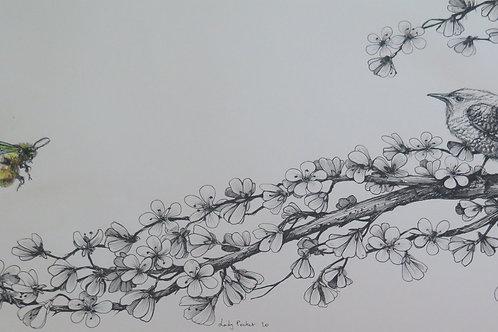 DESSIN ENCADRE By LADY POCKET
