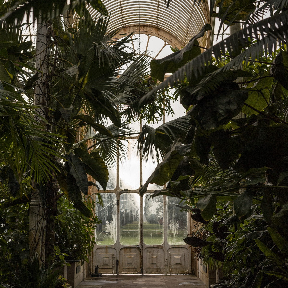 tropical plants and ferns at Kew Garden