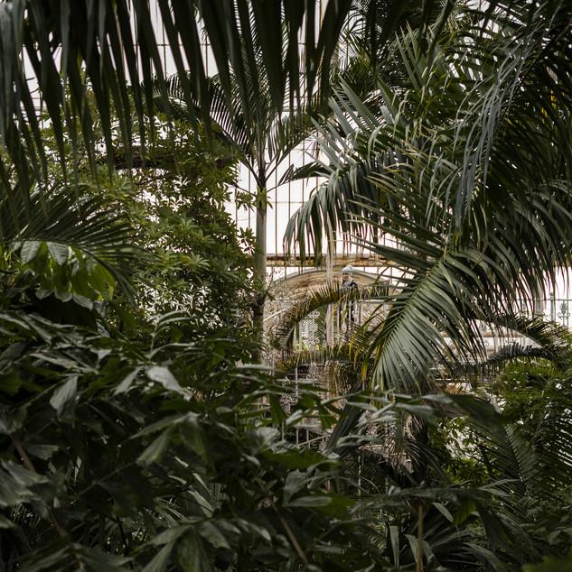 Kew Garden's temperate rooms