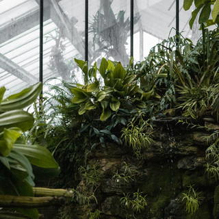 ferns and foggy window in Kew Garden