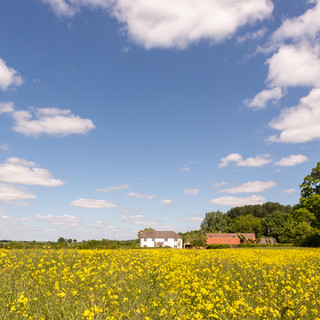modern house conversion set in Hampshire countryside and rapeseed field
