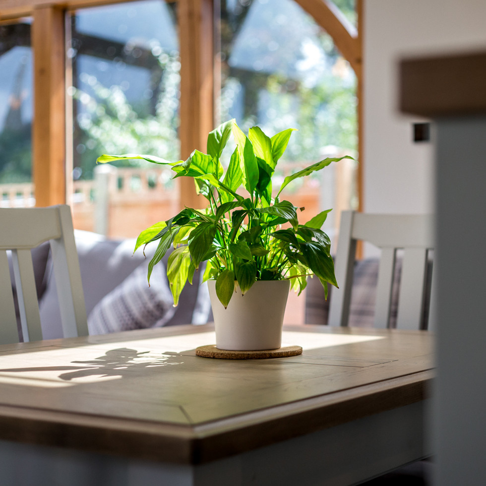 kitchen plant in airy and light modern kitchen