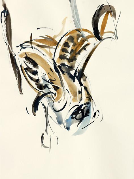 Short-eared owl 9