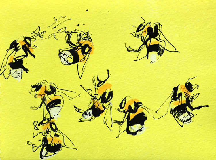 Bee studies