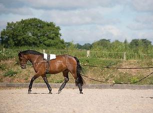 long reining.jpg