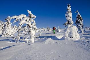 snow-shoe-snow-shoe-run.jpg