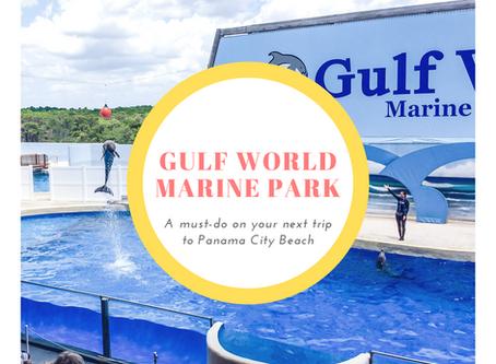 Things To Do: Gulf World Marine Park