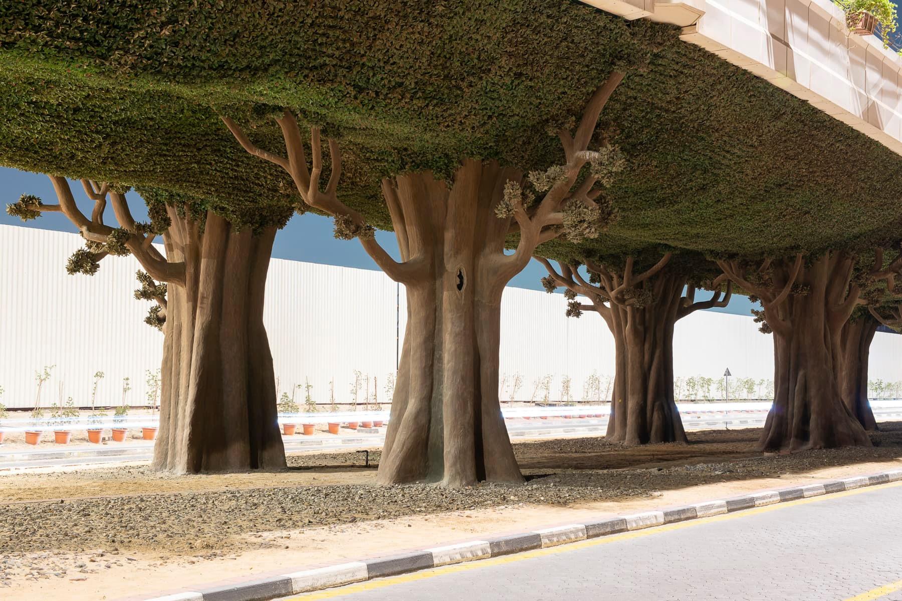 fabianschroder-in_natura-trees.jpg