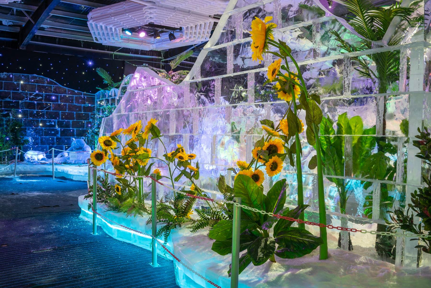 fabianschroder-in_natura-sunflowers.jpg