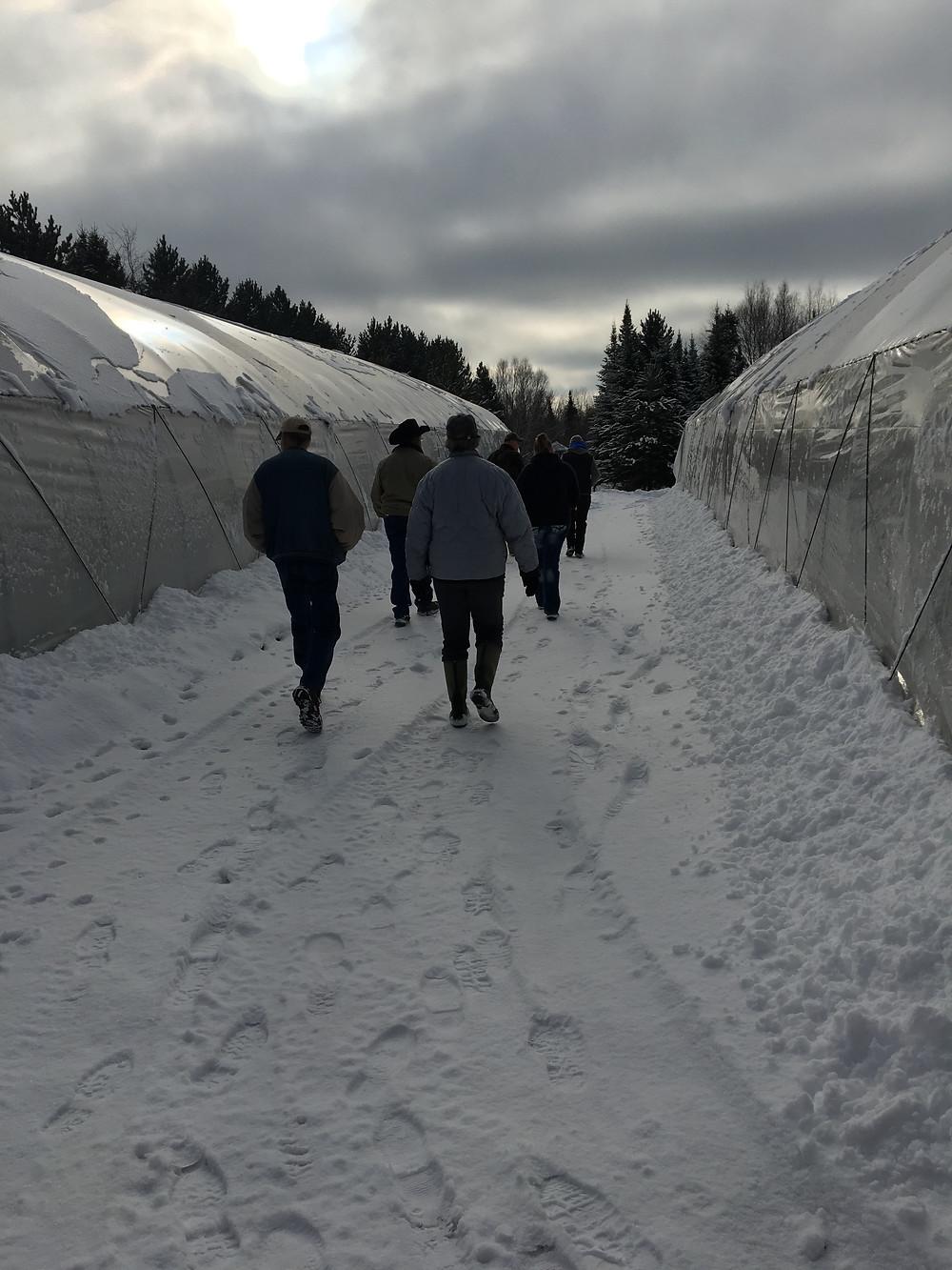 Walking between winter growing tunnels