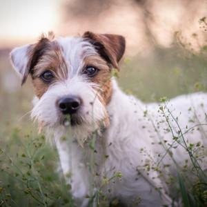 Junghunde, turbulente Zeiten