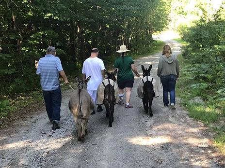 Donkey Walk Goshen.jpg