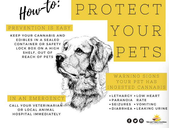 Poster: Protect your Pets