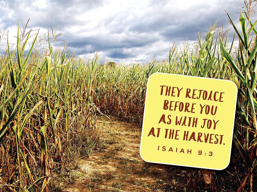 Harvest Isaiah 9.3.jpg