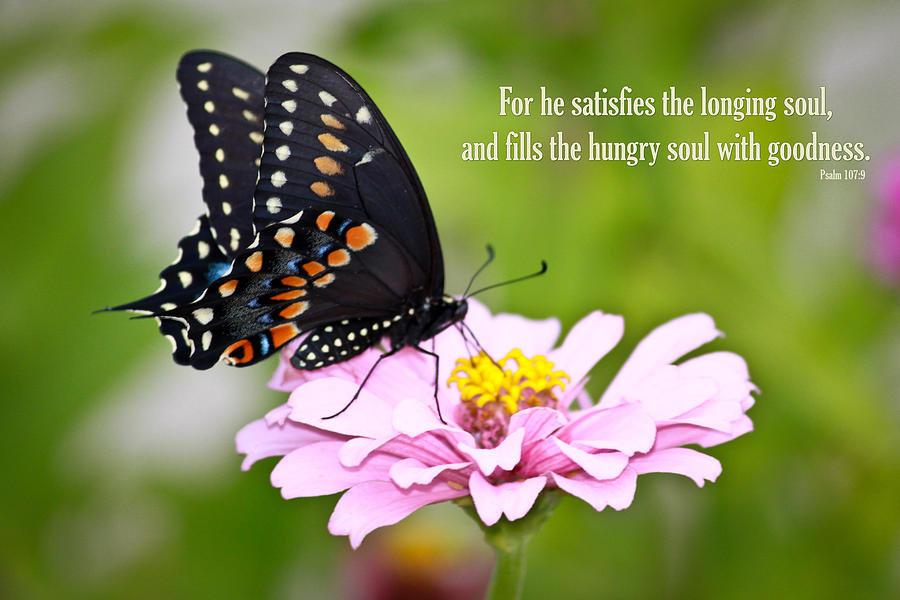 butterfly he satisfies.jpg