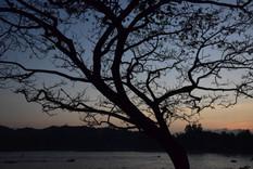 Branching into Sunset