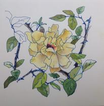 黄薔薇 Rose jaune.03