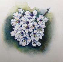 桜 Cerisier.02
