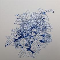 紫陽花 Hortensia.05