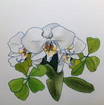 蘭 Orchidée.03