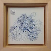 紫陽花 Hortensia.04