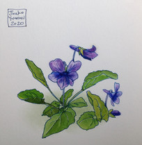スミレ Violette.01