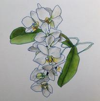 蘭 Orchidée.01
