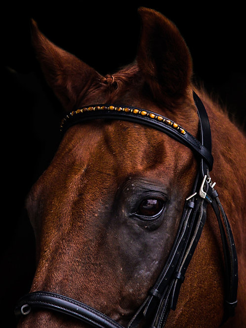 """Tiger Eye"" Browband"