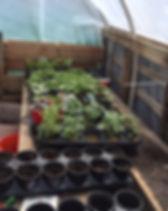 Community Garden 2016.jpg