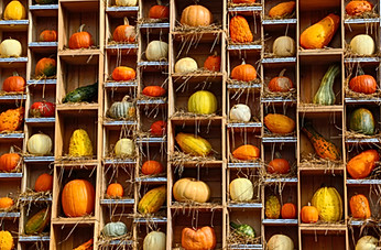 Pumkins and Gords on a wall