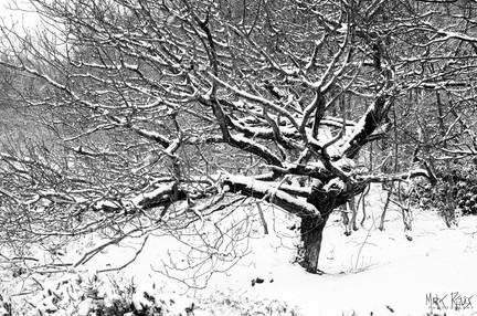 Freshly fallen snow.jpg